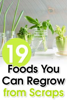 While many people think of food scraps - such as carrot tops, onion bottoms, and the tips of romaine hearts or pineapples - as waste (or future fertilizer), these items can be enjoyed all over again. Reduce waste, save money, and build self-sufficiency with this handy guide to growing real food from scraps... #Food #gardening #gardeningtips #gardeninghacks #regrow