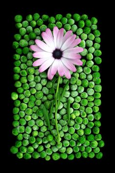 Flower on Peas on Black by sourcow on deviantART