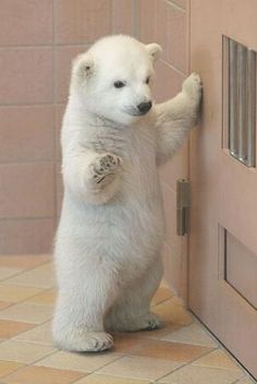 Pictures of Cute Baby Animals : 29 Postcard-Worthy Cuties! | UPrinting Blog by milagros