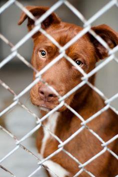 [유기견 입양전 질문들] 오늘도, 수 많은 강아지들이 우리의 곁을 떠났습니다. 사지마세요, 입양하세요.