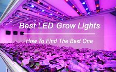 Best LED Grow Lights Review of 2018: Buying Guide: https://www.mygardenplant.com/best-led-grow-lights-review/ #mygardenplant