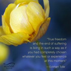 """True freedom and the end of suffering is living in such a way as if you had completely chosen whatever you feel or experience at this moment."" - Eckhart Tolle  Please 'Share and/or re-pin' this week's #‎PresentMomentReminder:   To receive automatic reminders from Eckhart, feel free to sign up here: http://www.eckharttolle.com/present-moment-reminders"