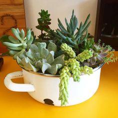 O Augusto tinha essa panela encostada em casa. Agora tem uma peça de decoração cheia de vida! Também quer renovar seus objetos? Fale com a gente!  #oitominhocas #suculentas #suculovers #ecofriendly #verde #decoração #plantinhas