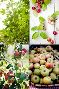 One day I'll live in an orchard.