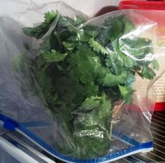 it always frustrates me how fast cilantro goes bad... now I know...How to Keep Cilantro Fresh - Vegetable Gardener