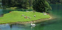 Camping am Fernsteinsee  |  Austria, Tirol