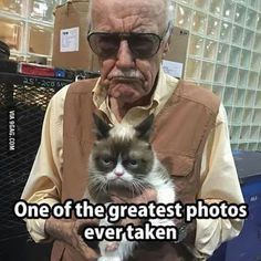 Stan Lee with his twin Grumpy Cat Best Picture For funny photo wedding For Your Taste You are lookin Grumpy Cat Quotes, Funny Grumpy Cat Memes, Funny Animal Jokes, Cute Funny Animals, Funny Animal Pictures, Animal Memes, Funny Photos, Funny Cats, Grumpy Cat Movie