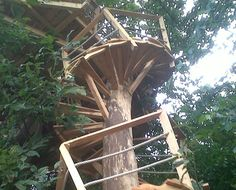1000 images about tree house on pinterest tree houses - Faire les plans de sa maison ...
