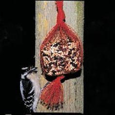 How to make bird seed blocks, ornaments, and hanging seed circles