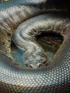 Metallic Snake