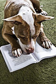 Animals Reading Books   animal training books & animal behavior books