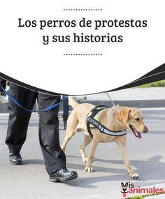 Los perros de protestas y sus historias  Una de las peculiaridades que en muchas ocasiones se pueden ver en este tipo de manifestaciones es la presencia de caninos en medio de la masa de gente. #manifestaciones #caninos #gente #curiosidades