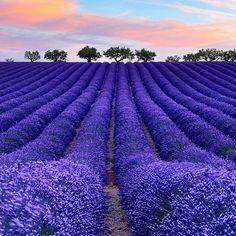France Vacations ≕≔≕≔≕≔≕≔≕≔≕≔≕≔≕≔≕≔≕≔ Location: Valensole, Provence Photo Credit: @simonepanzeriphotographer