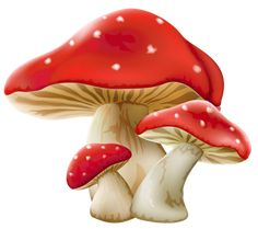 WEB AMB MOLTES IMTAGES GRATIS - Mushrooms PNG Picture