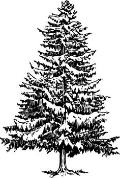 how to draw a Christmas tree, stencil 1 Pine Tattoo, Snowy Trees, Winter Trees, Free Tree Clipart, Christmas Tree Stencil, How To Draw Christmas Tree, Christmas Trees, Pine Tree Art, Tree Sketches