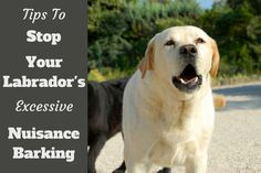 One of the main benefits of the human-canine partnership is a dog's natural ability to alert. You could say the talent for barking and guarding earned that first furry friend a…