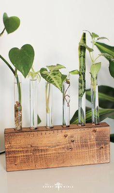 DIYed your DMs! — The Sorry Girls Propagate your plants with this adorable and chic propagation station! Click through to learn more!Propagate your plants with this adorable and chic propagation station! Click through to learn more! Indoor Garden, Garden Plants, Indoor Plants, Propigating Plants, Shade Plants, Room With Plants, House Plants Decor, Plant Rooms, Paludarium