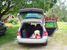 Schafpudel Moppi In der fahrenden Hundehütte