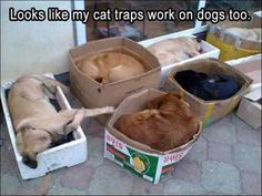Funny Animal Pictures Of The Day - 23 Pics #funnypictures
