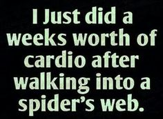 Amazing what a fitness device spider webs are,!
