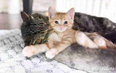Kitten with senior cat