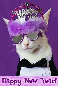 733d76b4363 Clothed Cats Happy New Year from a Cool Cat Sharing is caring