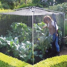 The Harrod Slot & Lock® Storm Proof Fruit & Vegetable Cage is a superb value 1.8m high walk-in fruit cage, especially for fruit and vegetable growers, providing a simple and cost effective way to protect your crops http://www.harrodhorticultural.com/harrod-slot-and-lock-storm-proof-1-8m-walk-in-fruit-cage-pid9038.html
