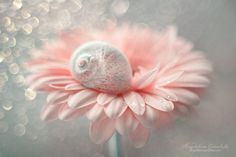 """Just Dreaming - Thank you for visiting my gallery :-) If you like my works, you can also find me on <a href=""""https://www.facebook.com/magdalenaginalska.photography""""> Facebook </a>"""