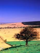 Yorkshire Wolds Walk - Settrington