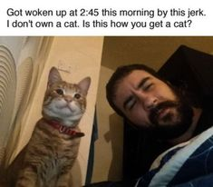 Breathtaking - Funny Cat Pictures With Birthday Captions #get
