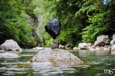 Beautiful Balanced Stones Sculptures in Rivers and Streams by Miha Brinovec