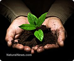 Feeding the soil: An introduction to the no-till gardening method. Read more @ http://www.naturalnews.com/040882_no-till_gardening_composting_home_garden.htm