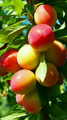 Mangas Fruit And Veg, Fruits And Vegetables, Fresh Fruit, Exotic Fruit, Tropical Fruits, Fruits Photos, Fruit Stands, Olive Oil Bottles, Fruit Photography