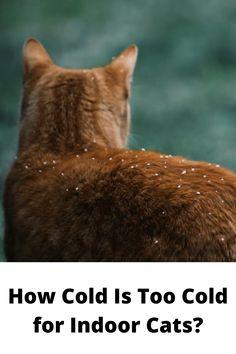 65 Ideeën Over Cat Life In 2021 Katten Kat Gedrag Yoga Kat