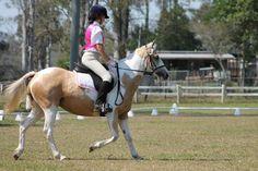 my old horse!! nancy