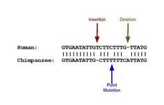 Pseudogene - Wikipedia, the free encyclopedia