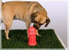 Best option for us since we have no secure yard only 2 large decks, we hooked up to dishwasher water and a timer to clean twice a day, really works. The Puggle puppy is getting the hang of it. Porchpotty.com, The #1 Selling Grass Litter Box for Dogs - Potty Training Made Easy..