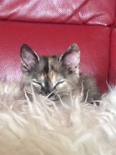 Questa è Minnie (Che dorme)