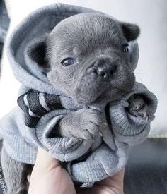 10 super cute puppies They are all so beautiful . … 10 super cute puppies 😍😍 They are all so beautiful😍 . Cute Little Animals, Cute Funny Animals, Funny Dogs, Funny Puppies, Super Cute Puppies, Cute Dogs And Puppies, Doggies, Adorable Puppies, Puppies Stuff