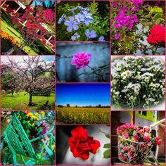 """""""Que sua vida tenha Mais cores Mais flores Mais amores."""" Chegou Setembro !!! #setembrolindo #primavera #spring #flower #mesdaprimavera #flower #decorecomfoto @vicky_photos_infantis https://www.facebook.com/vickyphotosinfantis http://websta.me/n/vicky_photos_infantis https://www.pinterest.com/vickydfay https://www.flickr.com/vickyphotosinfantis"""