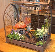 Indoor mini fairy garden in a bird cage house. Toadstool mushroom for a house and even a miniature bridge and lantern!