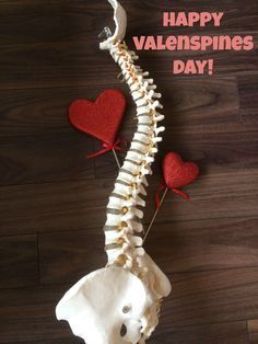 Happy ValenSPINES Day from the Innate Chiropractic and Wellness Team! May your February be filled with lots of joy laughter and love! Chiropractic Office Decor, Chiropractic Assistant, Chiropractic Humor, Family Chiropractic, Acupressure, Acupuncture, Postural, Massage Quotes, Homeopathy