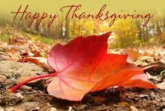 Happy thanksgiving bros!!!!! - ivy (Raven)