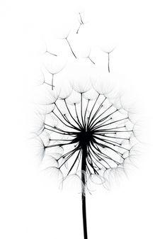 Dandelion Drawing, Dandelion Art, Dandelion Wall Decal, Wall Art Prints, Poster Prints, Pencil Sketch Drawing, T Art, Office Art, Cute Wallpapers
