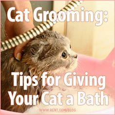 Bathing your cat can be a tough process–nothing seems to bring out the claws quicker than the sound of running water. In order to keep this event as safe as possible for you and your cat, keep… Cat Care Tips, Pet Care, Pet Tips, I Love Cats, Cute Cats, Cat Toilet Training, Cat Bath, Kitten Care, Cat Grooming