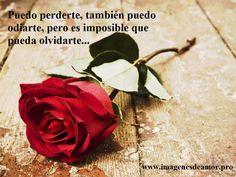 Puedo perderte, también puedo odiarte, pero es imposible que pueda olvidarte...