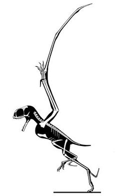Anurognathus is a genus of small pterosaur that lived during the late Jurassic Period (Tithonian stage). With an estimated wingspan of fifty centimetres (20 inches) and a nine centimetre long body (skull included), its weight was limited.