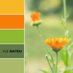 Summer or autumn flower background. Outdoor shot in park with shallow depth of field Color Palette #383 – Ave Mateiu  -  Fall Autumn 2020, color palette, color palettes, colour palettes, color scheme, color inspiration, color combination, art tutorial, collage, digital art, canvas painting, wall art, home painting, photography, weddings by color, inspiration, vintage, wallpaper, background, rustic, seasonal, season, natural, nature
