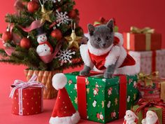 photo of christmas box with kitten - Yahoo! Search Results