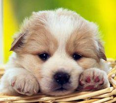 Antes de pensar em comprar um cão com pedigree, uma dica é pesquisar os cães que…